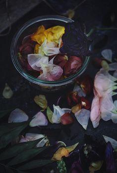 Fallen Flower Petals - CHRISTINA GREVE