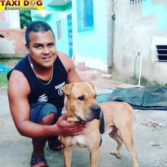 TAXI DOG MONTANHA TRANSPORTE DE ANIMAIS NO RIO DE JANEIRO: Sharpei Hachiko17/02/2016 -- Esse sharpei grandão ...