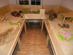 Love this so much.  I really wanted to do this for my piggies but was unable to afford it.