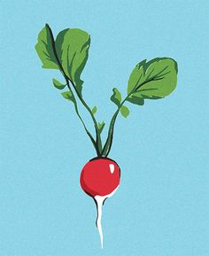 Esme Lonsdale, food, illustration, radish, veg, nature, plant, colour, print, drawing