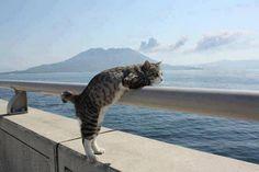 Cat Enjoys Ocean View