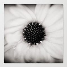 Daisy in mono. Canvas Print by kostaspavlis Fine Art Prints, Canvas Prints, Daisy, Black, Photo Canvas Prints, Black People, Art Prints, Margarita Flower, Daisies