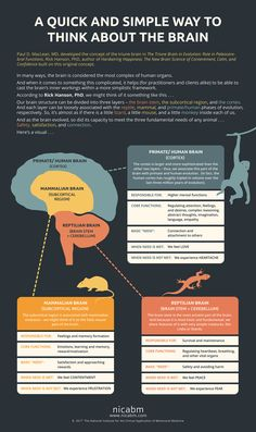 Quick and Simple Way to Think about the Brain we created an infographic based on the work of Paul D. MacLean, MD and Rick Hanson, PhD that you can share with your clients. (Please feel free to make a copy to give to them. Brain Anatomy, Anatomy And Physiology, Skull Anatomy, Triune Brain, Brain Facts, Brain Science, Life Science, Computer Science, Science Education