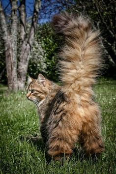 236 best Banjo images in 2019 | Pretty cats, Beautiful Cats, Cats