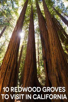 The Ten Best Redwood Groves in California via @cathroughmylens