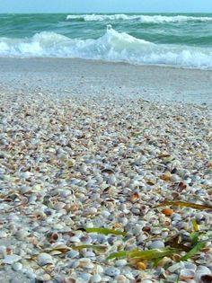 shells n surf st pete bch Need A Vacation, Florida Vacation, Florida Travel, Florida Beaches, Dream Vacations, Vacation Spots, Florida Trips, Clearwater Florida, Florida Keys
