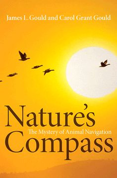 Nature's compass : the mystery of animal navigation / James L. Gould, Carol Grant Gould. Toledo campus. Call number : QL 782 .G68 2012