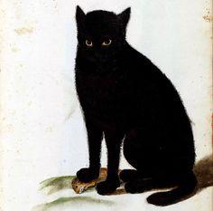 Czarny kot /Catus niger/ (XVI w., akwarela ze zbiorów Ulissesa Aldrovandiego, Università di Bologna, Fondo Ulisse Aldrovandi)