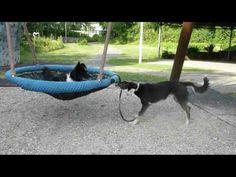 How Dogs Get Heartworm Refferal: 8521242874 Dog Friendly Backyard, Dog Backyard, Puppy Playground, Dog Kennel Designs, Dog Enrichment, Dog Boarding Near Me, Dog Yard, Pet Dogs, Pets