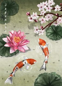 Koi, lily and blossoms                                                       …