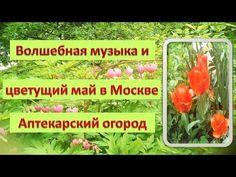 Волшебная музыка и цветущий май в Москве Аптекарский огород