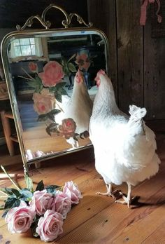 Изображение Backyard Poultry, Chickens Backyard, Farm Mirrors, Farm Animals, Cute Animals, Happy Day Farm, Chicken Pictures, Beautiful Chickens, Little Christmas Trees