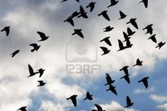 Pigeons flying; a symbol of freedom.