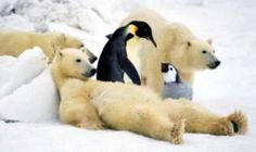 polar bears and penguins funny happy new year message