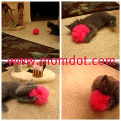 Tulle ball tutorial.  I just pinned the kitten-specific photo because, well, it has a kitten in it!!