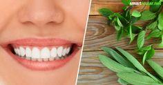 Zahnfleischprobleme sind nicht nur schmerzhaft, sondern können auch zu Folgeschäden an den Zähnen führen. Mit diesen einfachen und natürlichen Tipps bleibt das Zahnfleisch gesund und stark. Stark, Beauty, Peppermint, Health And Fitness, Projects, Cosmetology