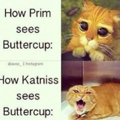 Lol haha funny pics / pictures / SO TRUE! / Buttercup / Katniss / Hunger Games Humor / Shrek / Cats AWW Hows cute Bottom picture:O_O The Hunger Games, Hunger Games Humor, Hunger Games Fandom, Hunger Games Catching Fire, Hunger Games Trilogy, Fandom Jokes, Game Quotes, Funny Quotes, Funny Humor