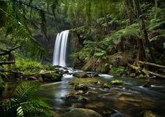 Forest Deep by John Dekker The Otways Rainforest, Victoria, Australia Beautiful World, Beautiful Places, Simply Beautiful, Deep Photos, Wild Forest, Forest River, Mystical Forest, Paludarium, Wonders Of The World