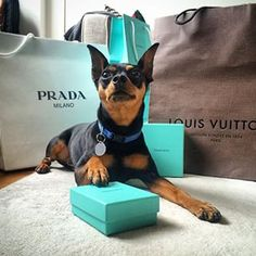 """When you see a little blue box, you know he did good."" 