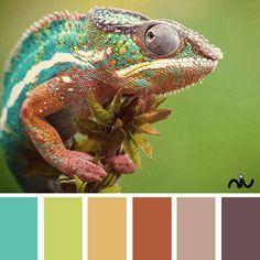 Chameleon (fauna)