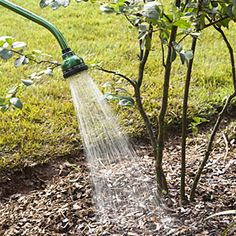 Home Gardening Tips: 15 really dumb mistakes