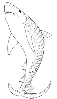 Shark Printables Coloring Pages Inspirational Tiger Shark Coloring Page Octopus Coloring Page, Shark Coloring Pages, Easy Coloring Pages, Printable Coloring Pages, Coloring Books, Free Coloring, Shark Images, Shark Pictures, Hai Tattoos
