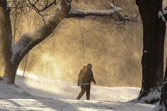 A person walks through Fort Greene Park during winter storm Niko in the Brooklyn borough of New York City, U.S. February 9, 2017. REUTERS/Stephanie Keith #NewYork #Winter