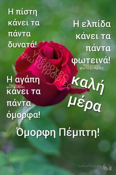 Beautiful Pink Roses, Good Morning, Words, Google, Quotes, Buen Dia, Quotations, Bonjour, Bom Dia