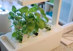 """Product: Click and Grow Smart Herb Garden Price: $99.95 Rating: Strong Recommend* I love growing my own food. Sadly though, I have spent most of my adult life in tiny apartments with limited light and no outdoor space. Enter the Smart Herb Garden, a setup for growing herbs indoors in even the smallest and darkest of spaces, which promises success for even those with the """"un-greenest"""" of thumbs."""