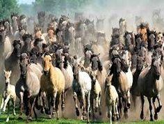 caballos criollos