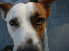 close up of my dog Fenway