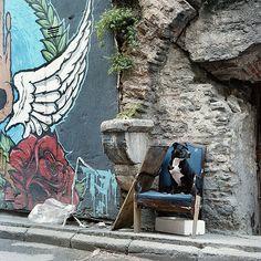 Rock'n'roll dog, 2016, Istanbul http://www.juliasmirnova.com/