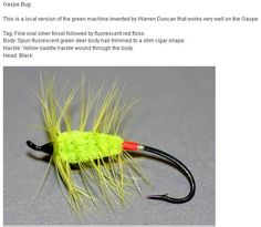 Gaspe Bug