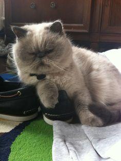 #Cat: Winston
