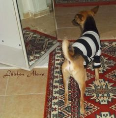 ....# Lilithin #....: Haydut Bey'in Kazağı ( köpek kazağı)Dog clothes sweater