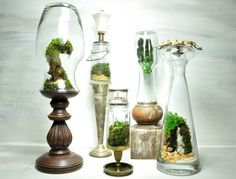 """Terrariums! always wanted to have one! they are so """"old world"""" """"timeless"""" this are low maintenance, like """"tranquility in the midst of the daily chaos"""" time to look for one; yes!"""