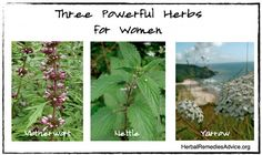 """There are many supportive and nourishing herbs that are beneficial for women's health. Rather than generalize herbs as """"women's herbs"""" or """"men's herbs"""", it's better to know what you personally would benefit from."""