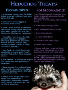 What not to feed your hedgehog versus what to feed your hedgehog.