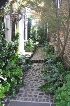 Side hard brick walkway // place drain behind ferns to keep runoff rainwater away from foundation