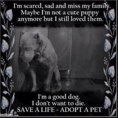 Adopt an animal, please!!