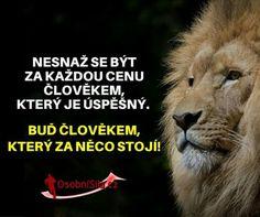Lion, Leo, Lions