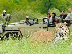 Sudafrica6 Animals, Animaux, Animales, Animal, Dieren