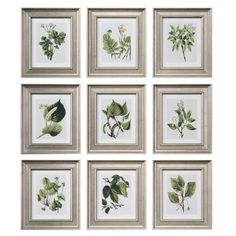 Uttermost Leaf Botanical Study Framed Print Set - 33497