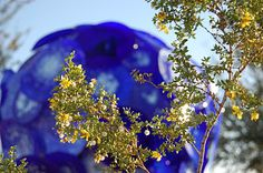 Chihuly In The Desert, AZ