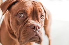 We have met clients who have not traveled in years because they were too afraid to entrust their pet's livelihood withsomeone else. Honestly, we really can't blame them for being apprehensive! Caring for a member of someone else's family is a bigresponsibility that should be taken seriously. This article is designed to help you weed…