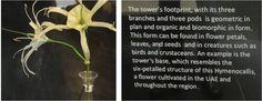 Hymenocallis fleur qui a inspiré l'architecture de Burj Khalifa, plus haute tour du monde