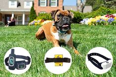 For stubborn dogs that don't respond to traditional training methods, anti-bark collars may be necessary. Here are the best citronella dog collar choices. Anti Bark Collar, Puppy Chew Toys, Dog Anxiety, Dog List, Types Of Dogs, Dog Paws, Dog Supplies, Dog Owners, Dogs