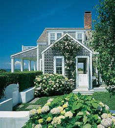 A shingle-clad house on Nantucket with crisp white trim, climbing roses and hydrangeas.
