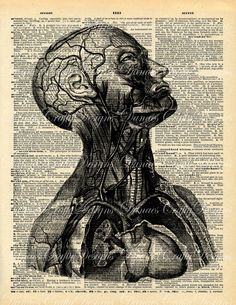 Vintage Anatomy Torso Print on Dictionary Print Background - V2 - 8.50x11-Buy 2 Get 1 Free Sale. via Etsy.
