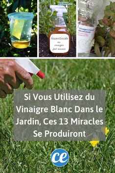If vous utilisez du vinaigre blanc dans le jardin. S miracles se produiront. How To Roast Hazelnuts, Miracle, Weed Killer, White Vinegar, Balcony Garden, Water Garden, Helpful Hints, About Me Blog, Gardening